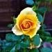 Dzień dobry wszystkim. Życzę miłego i słonecznego dnia. Pozdrawiam:)