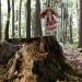 Lala VII w lesie