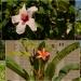 Faro, miasto kwiatów z se<br />rdecznymi pozdrowieniami:<br />) :: W Portugalii można podziw<br />iać nie tylko zabytki ale<br /> też roślinność! Prześlic<br />zna,bujna zieleń