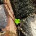 Skalno-roślinkowo