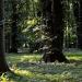 leśne spojrzenie:)