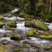 Szlak pieszy zielony-Kasp<br />rowy Wierch ::
