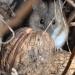 :)) :: Mysz od Myszci :-P Spotka<br />na gdzieś w krzakach, pod<br /> dorodnym orzechem , na m<br />ałą przekąskę z nory