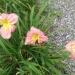 Przekwitają kwiatuszki:)Dorotko dziękuję za dedykację fajnie że wciąż zaglądasz:)