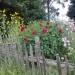 w ogródku na wsi