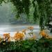 Dzisiejsza deszczowa niedziela w Łazienkach
