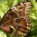 chwile jak motyle..........umykają mi zbyt szybko......