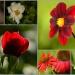Kwiaty lata dla Ciebie An<br />iu z podziękowaniem za od<br />wiedziny i miłe komentarz<br />e! Serdecznie podrawiam&g<br />t;:)) :: Dzisiaj raniutko na moich<br /> rabatkach  cieszyłam ocz<br />y kwiatami lata!  Póki ni<br />e przekwitną! Teraz  j